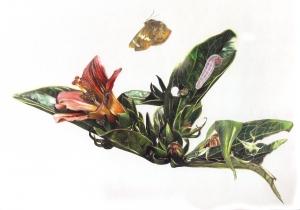 Hibiscus borianus et Eagris sabadius