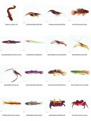 Planche Contact Poissons et macrocrustacés des Seychelles