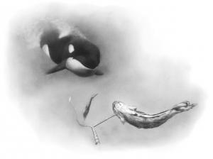 Scène de prédation orque et légine