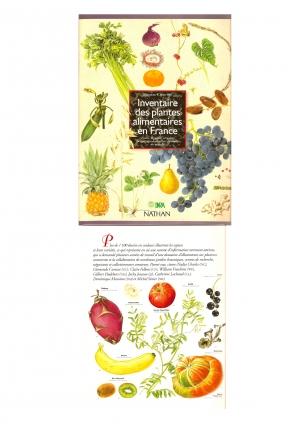 """""""Inventaire des plantes alimentaires"""" M. Chauvet - INRA - Nathan"""