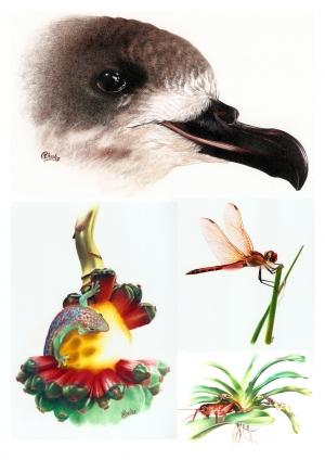 Planche pétrel de Barrau, phelsuma, demoiselle et grillon