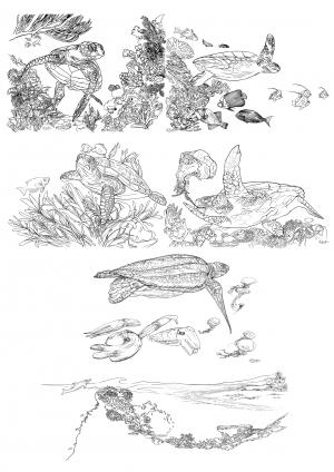 Planche coloriage pour les 5 espèces de tortues marines