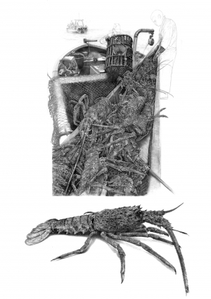 Pêche à la langouste australe