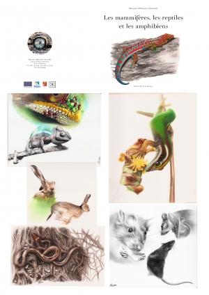 """Livret """"Mammifères, reptiles et amphibiens"""" Coffret Biodiversité - Museum"""