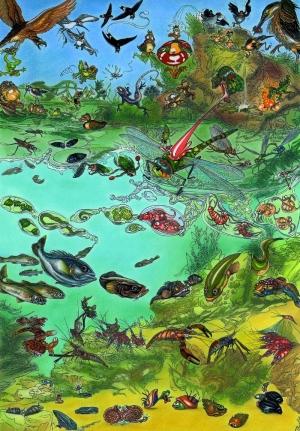 Le peuple des étangs et des rivières à la Réunion